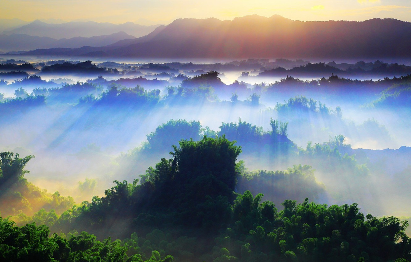 Photo wallpaper the sun, rays, trees, landscape, nature, tree, beauty, morning, day, trees, day