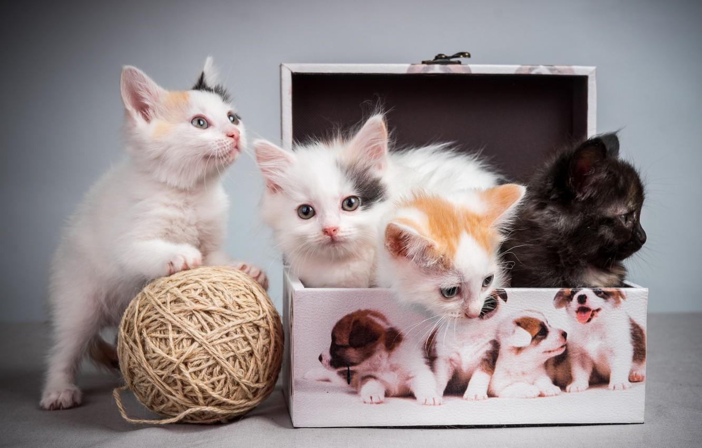 Photo wallpaper tangle, kittens, pussies, box, box, kittens, tangle, pussies