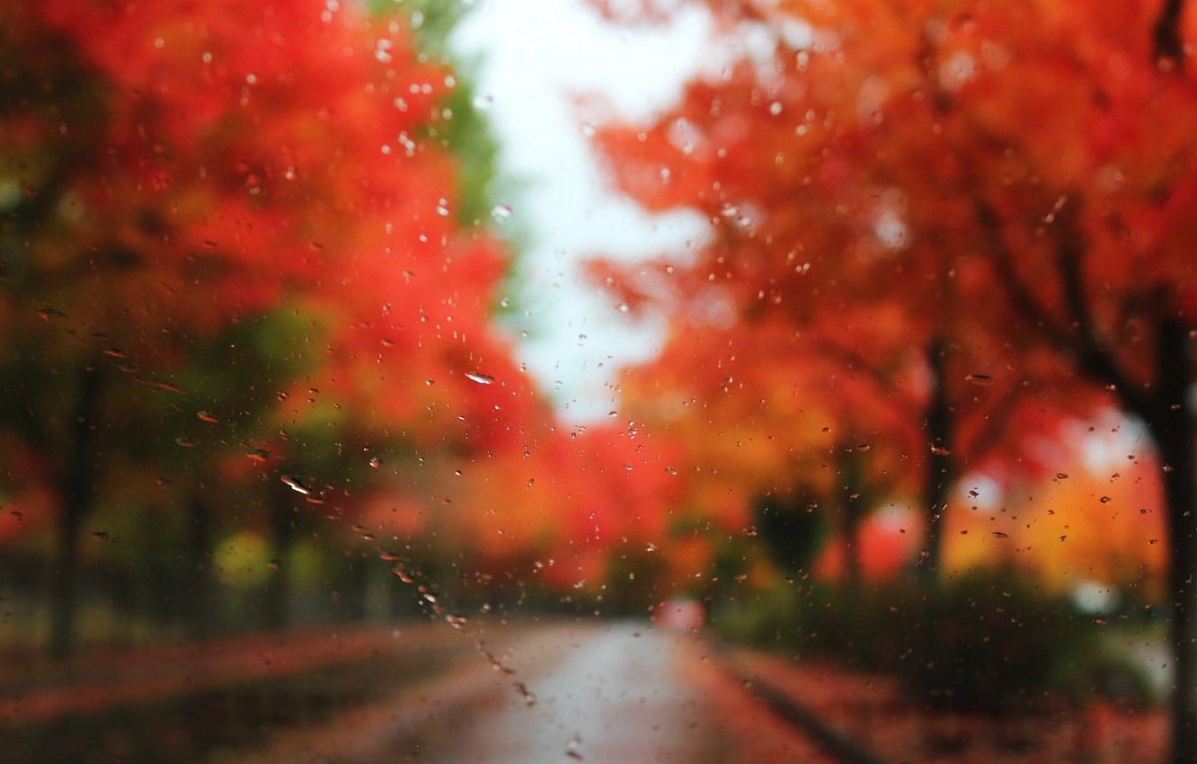Photo wallpaper road, autumn, glass, drops, trees, rain, blur