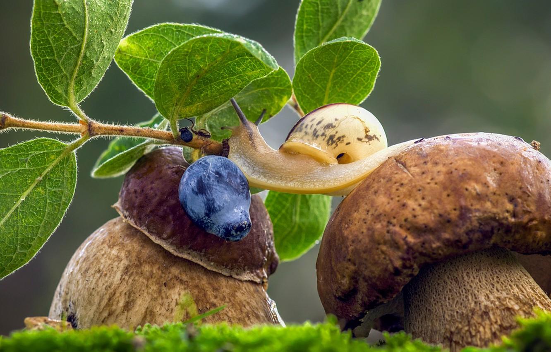 Photo wallpaper grass, macro, mushrooms, snail, berry, blueberries, mushrooms