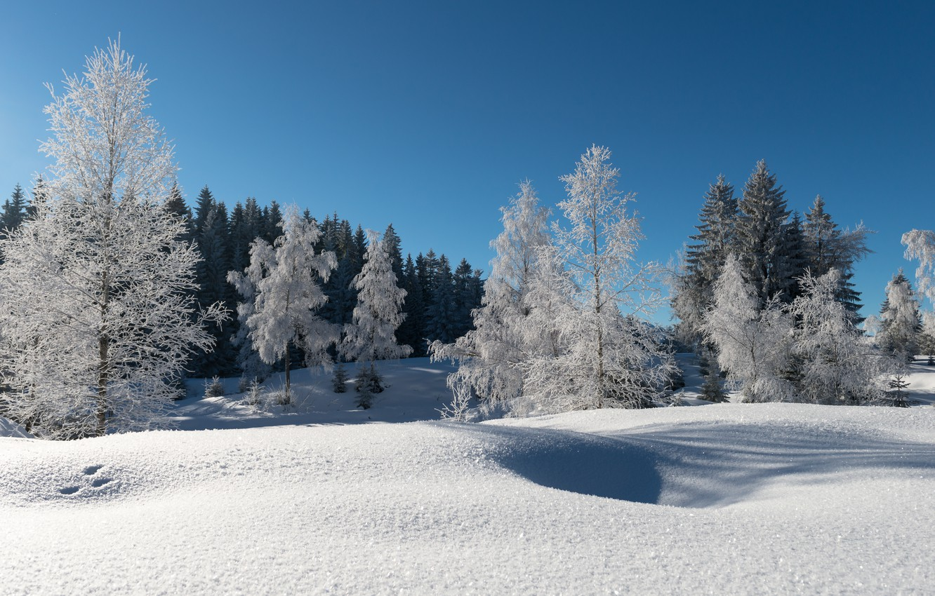 Photo wallpaper winter, frost, forest, snow, trees, blue sky