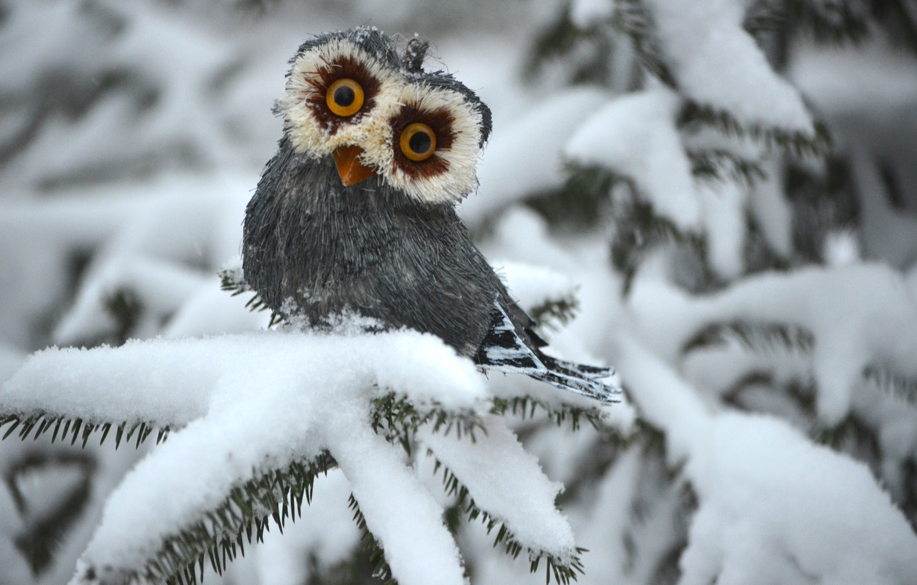 Photo wallpaper winter, owl, spruce, white