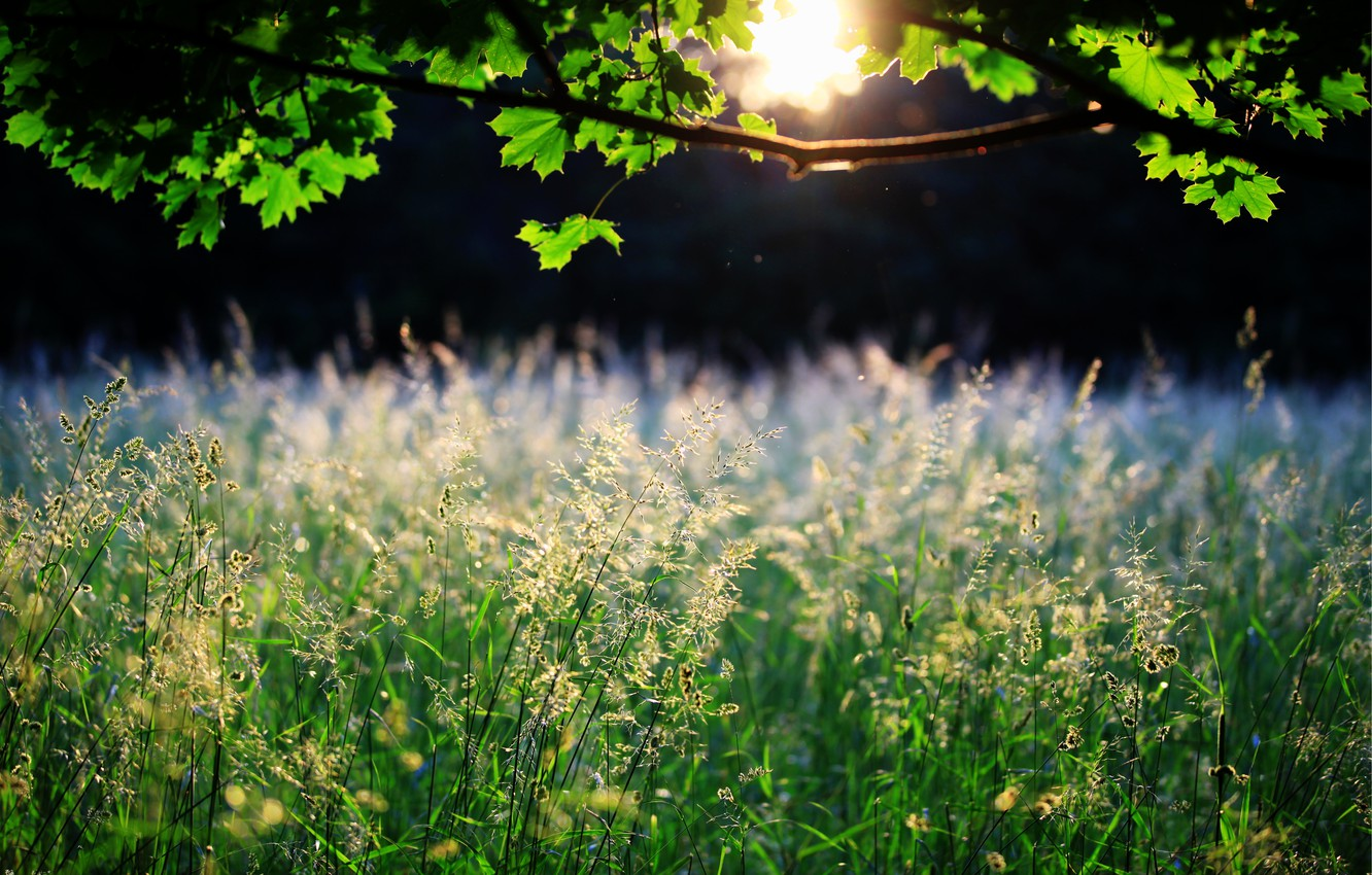Photo wallpaper grass, leaves, the sun, nature, tree, spikelets