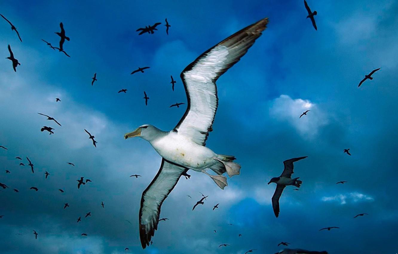 Photo wallpaper clouds, blue, Seagull, Birds