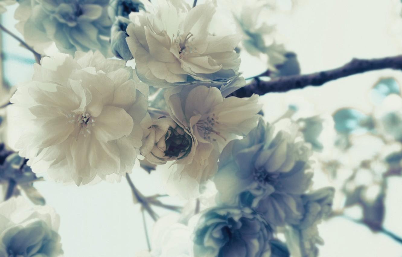 Photo wallpaper macro, flowers, branches, nature, tree, plant, petals, Sakura, buds, flowers