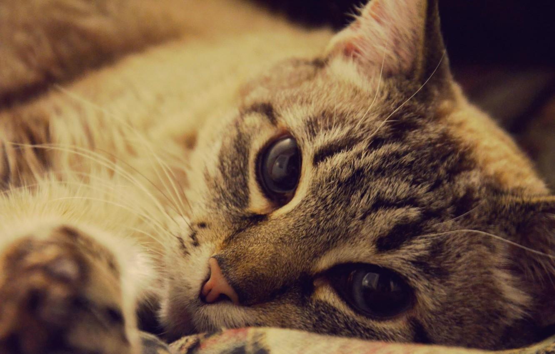 Photo wallpaper animals, cat, cute, beautiful, cat, animal, lovely, cute, pets, Pets