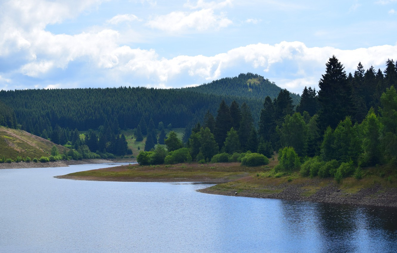 Photo wallpaper forest, the sky, clouds, trees, landscape, river, shore