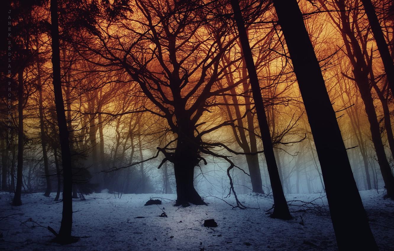 Photo wallpaper dark, forest, trees, snow, fog