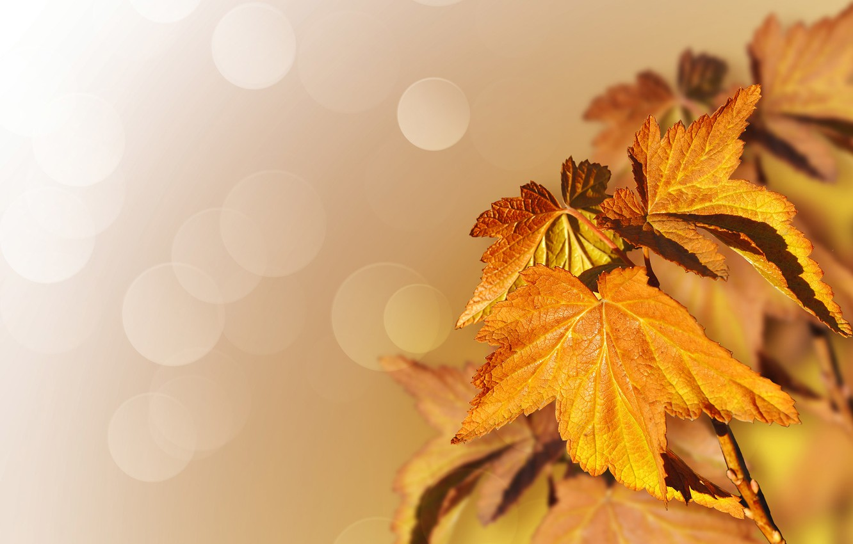 Photo wallpaper autumn, leaves, nature, tree, maple, bokeh, Larisa Koshkina