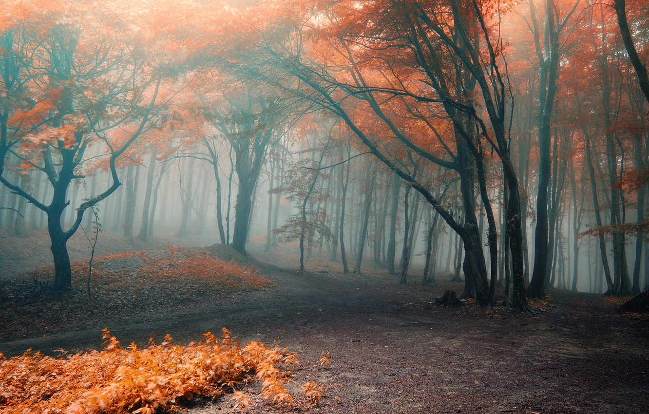 Photo wallpaper autumn, forest, leaves, trees, branches, nature, fog, orange, paths