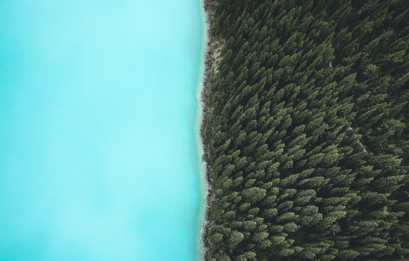 Photo wallpaper forest, nature, river, the view from the top