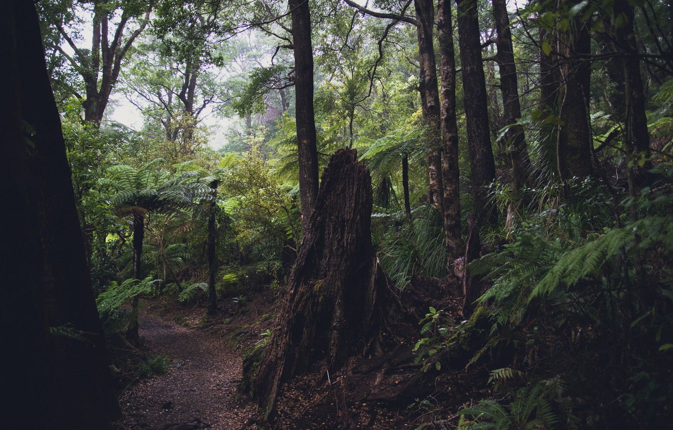 Photo wallpaper forest, leaves, trees, trail, jungle, fern