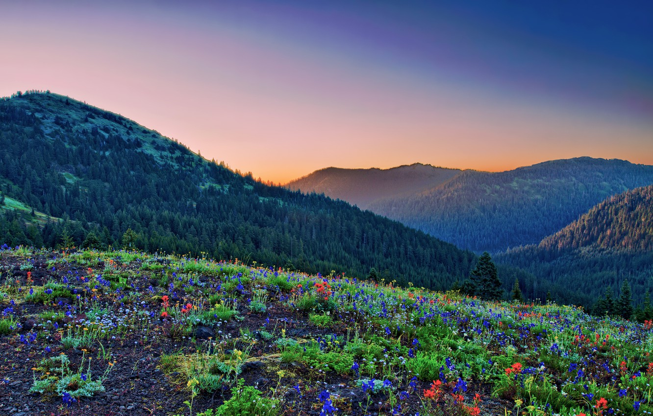 Photo wallpaper mountains, glade, forest, colors