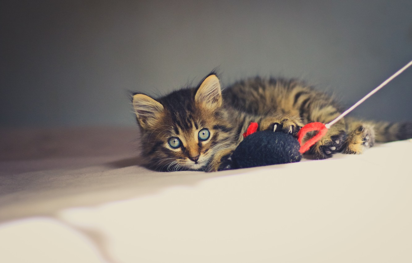 Photo wallpaper look, kitty, toy, eyes, mouse