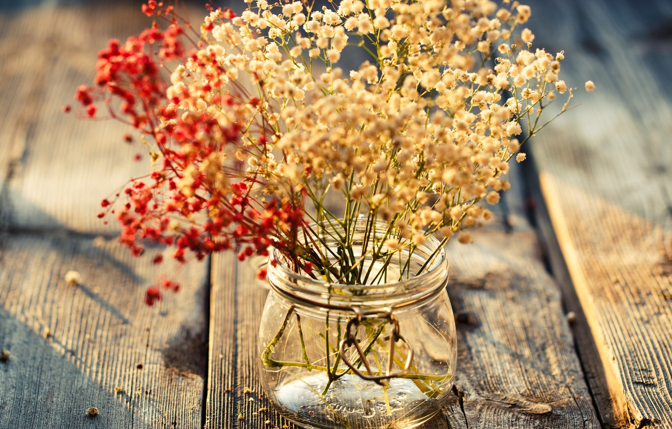 Photo wallpaper leaves, flowers, background, widescreen, Wallpaper, plants, vase, wallpaper, flowers, widescreen, background, full screen, HD wallpapers, …