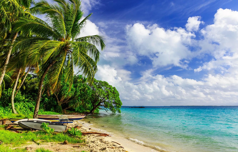 Photo wallpaper sand, sea, beach, palm trees, shore, summer, beach, sea, sand, shore, paradise, palms, tropical