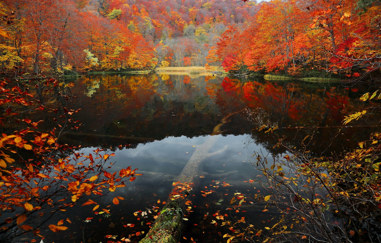 Photo wallpaper autumn, forest, leaves, water, trees, lake, slope, the crimson