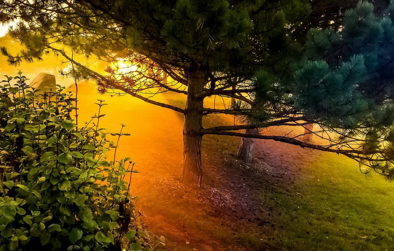 Photo wallpaper light, trees, nature