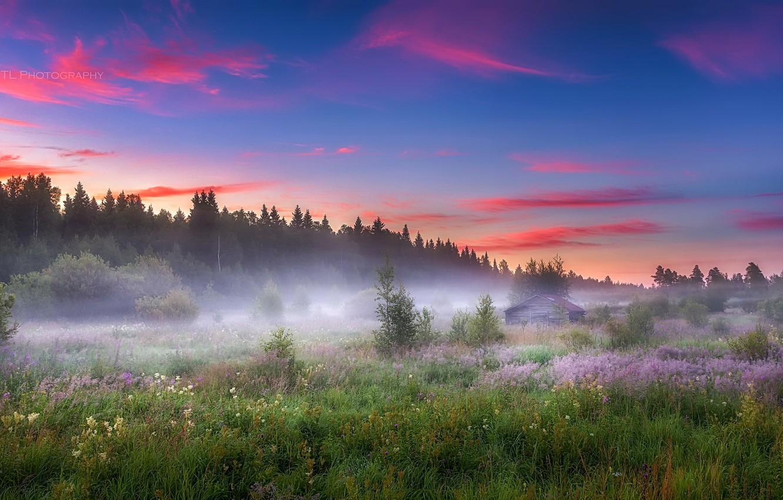 Photo wallpaper field, summer, fog, morning