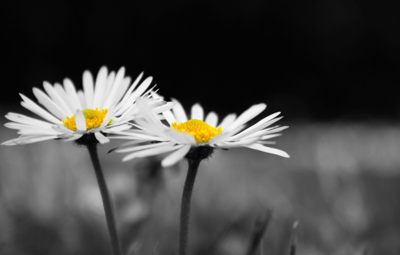 Wallpaper Flowers Widescreen Black And White Hd Wallpapers
