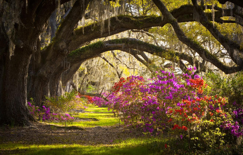 Photo wallpaper summer, trees, landscape, flowers, nature, beauty, unlocki
