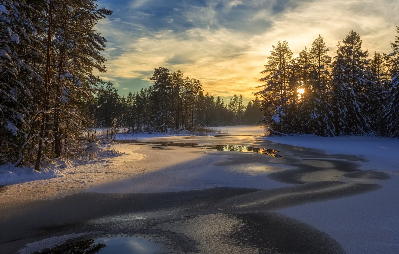 Photo wallpaper winter, forest, snow, trees, lake, Sweden