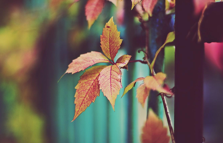 Photo wallpaper autumn, leaves, orange leaves, dry leaves