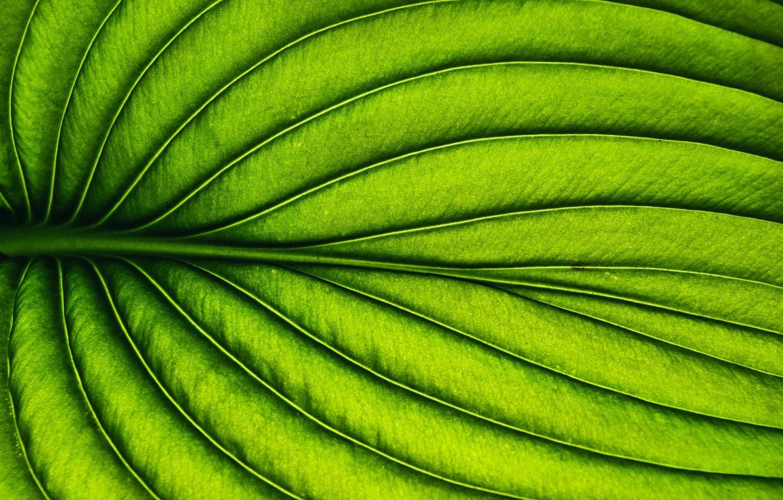 Photo wallpaper macro, sheet, plant