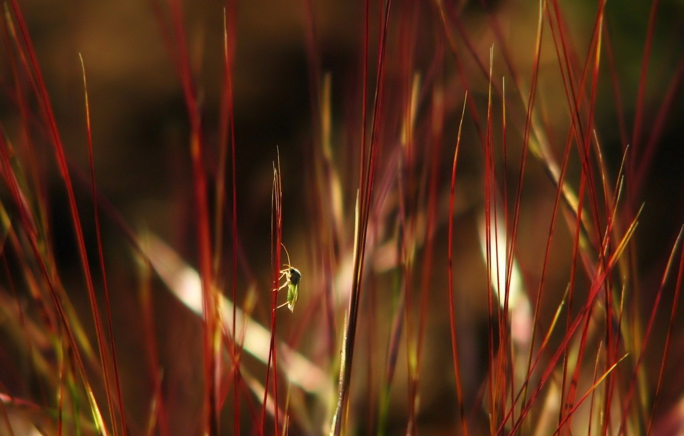 Photo wallpaper grass, leaves, myopia, bug, red garbage