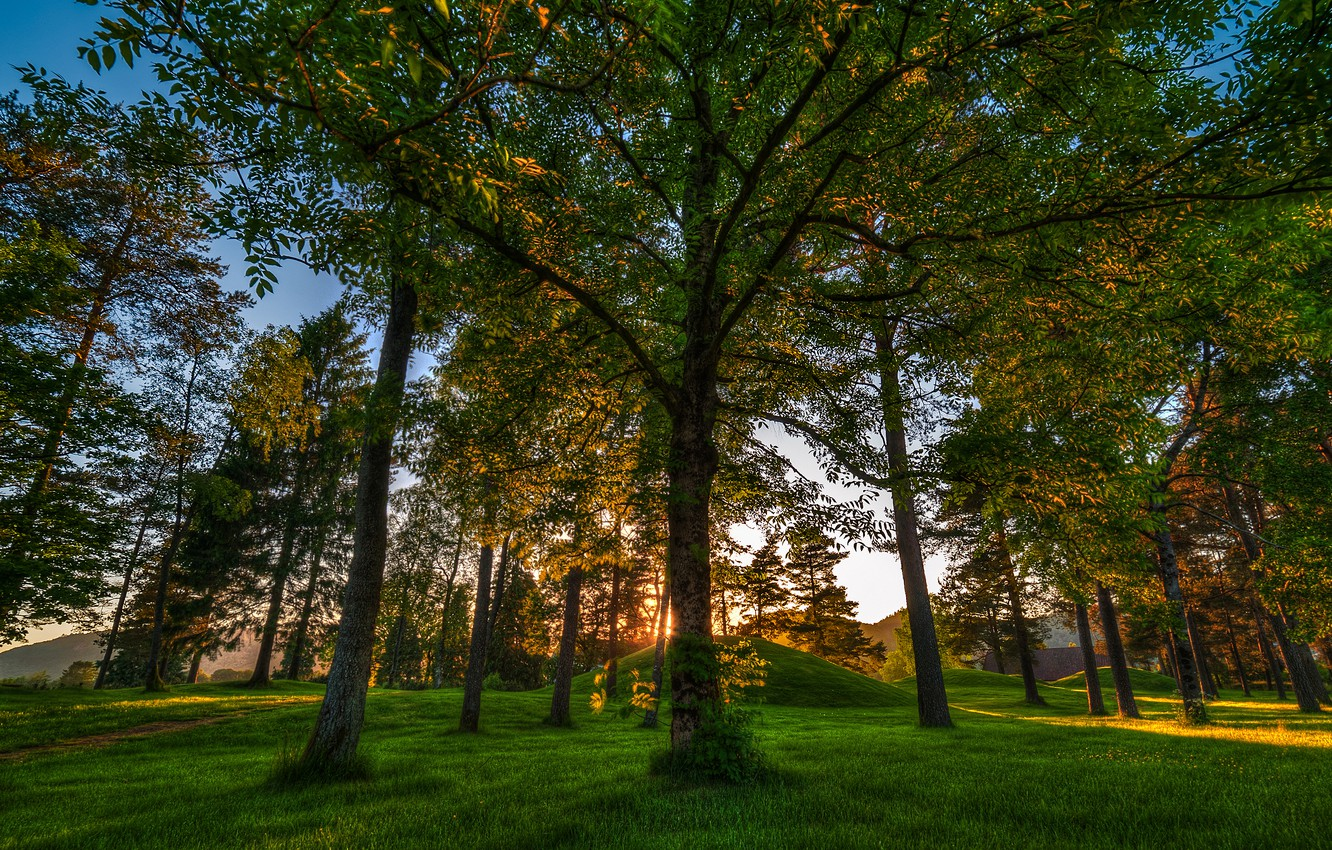 Photo wallpaper forest, trees, Norway, Norway