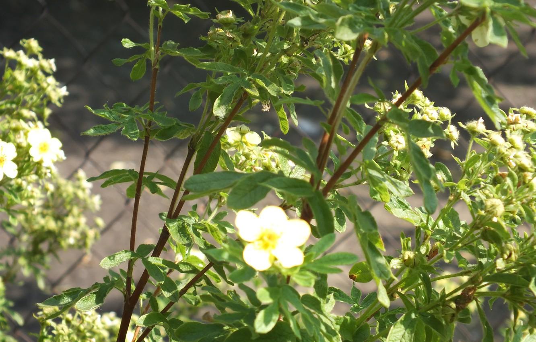 Photo wallpaper summer, flowers, green, foliage, Nature