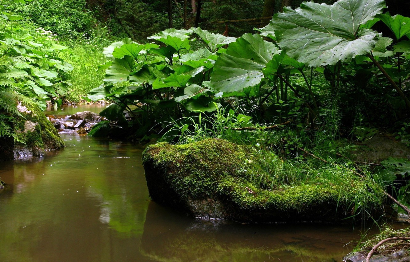 Photo wallpaper FOREST, STONES, GRASS, GREENS, LEAVES, MOSS, SPRING, STREAM, MUGS