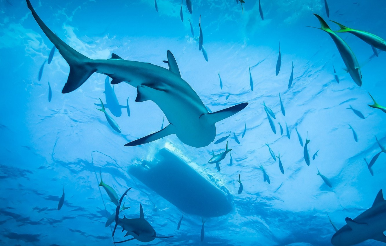 Photo wallpaper Shark, Ocean, Diving