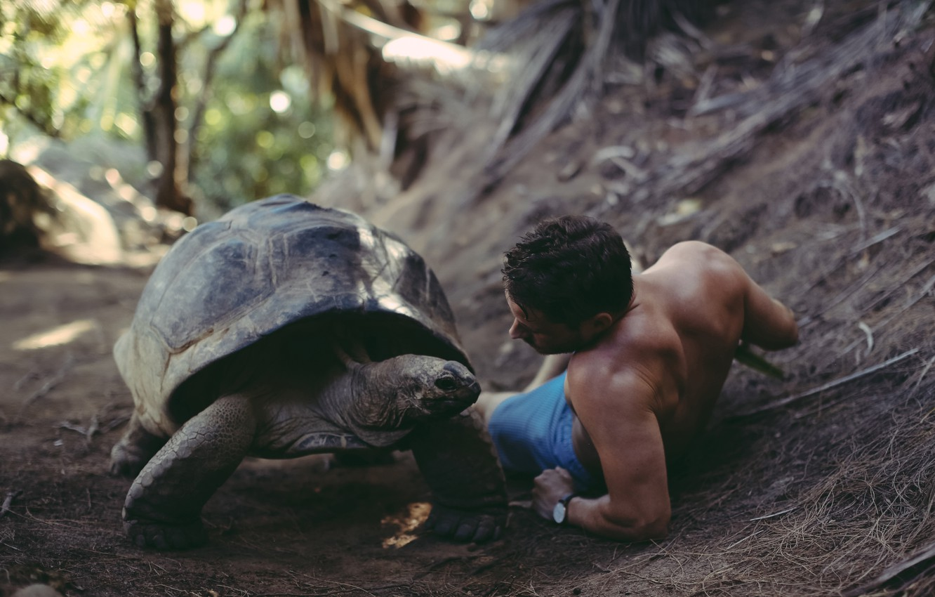 Photo wallpaper turtle, guy, David Olkarny, That was a big discussion
