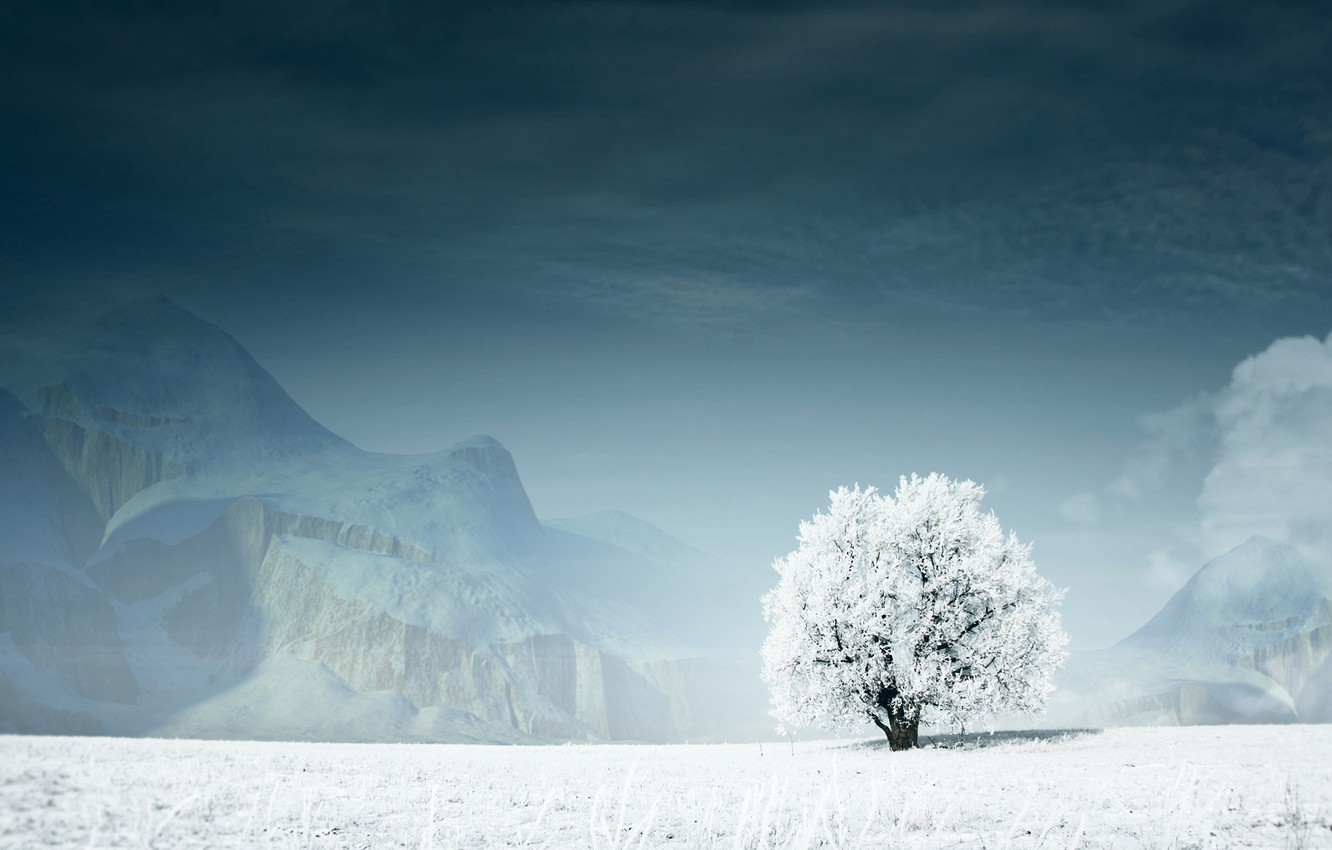 Photo wallpaper winter, snow, mountains, Tree