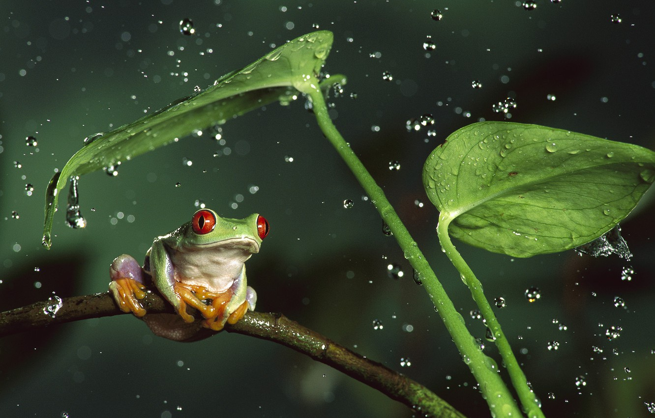 Photo wallpaper animals, leaves, water, drops, squirt, nature, stems, frog, animals
