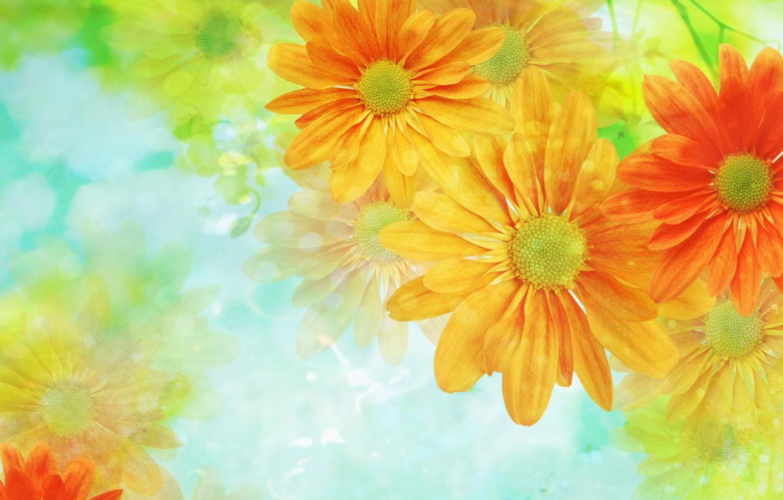 Photo wallpaper flowers, background, Wallpaper, light