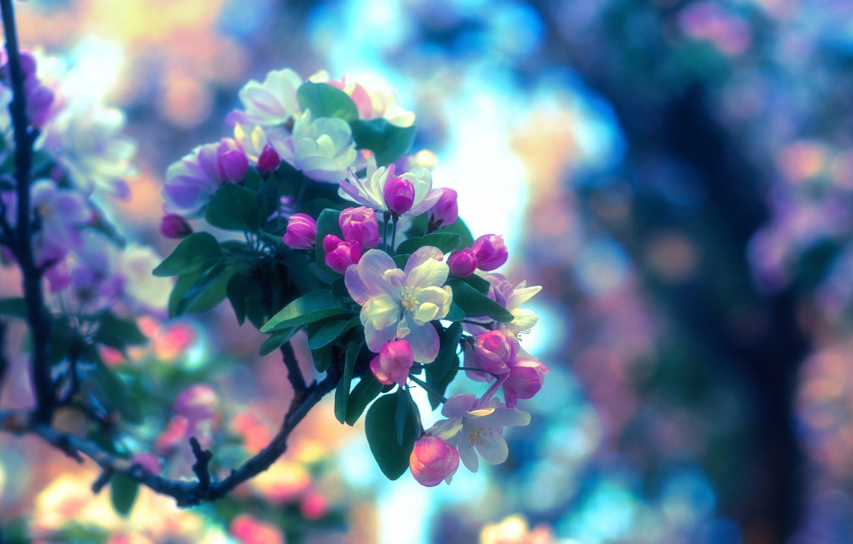 Photo wallpaper spring, Apple, flowering