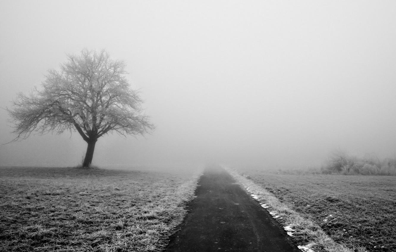 Photo wallpaper winter, road, snow, trees, nature, fog