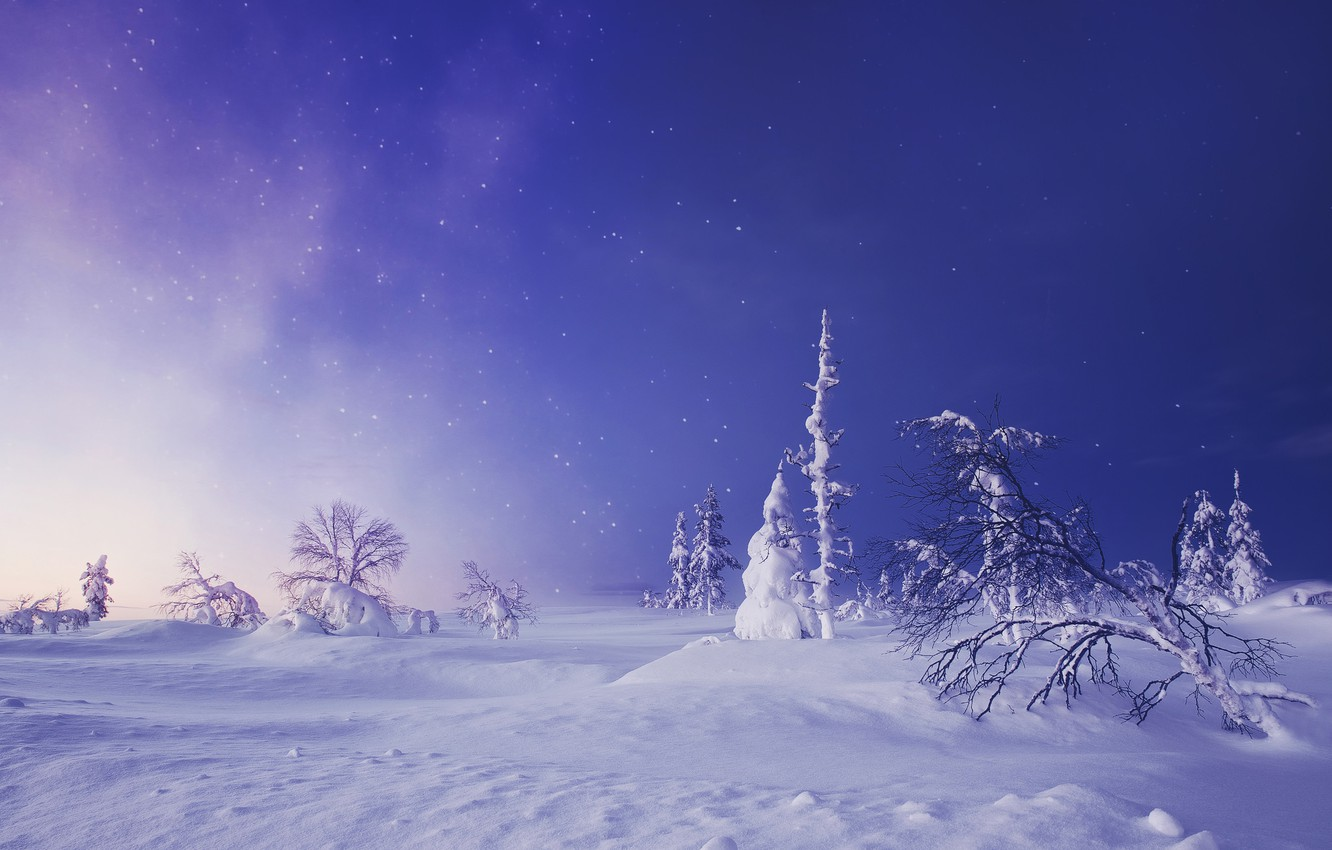 Photo wallpaper winter, snow, trees, the snow, Finland, Finland, Lapland, Lapland, starry sky
