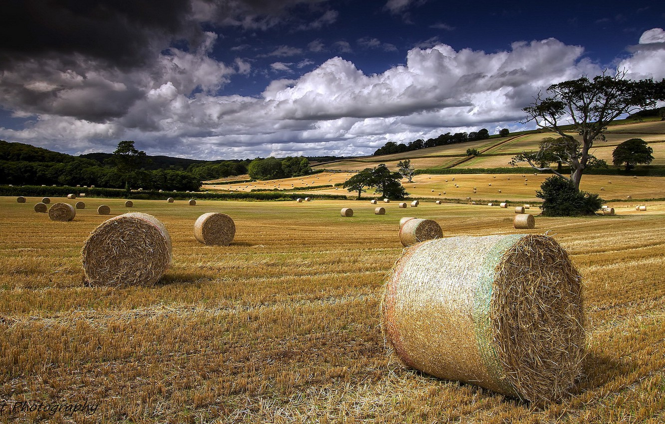 Photo wallpaper field, summer, landscape, hay