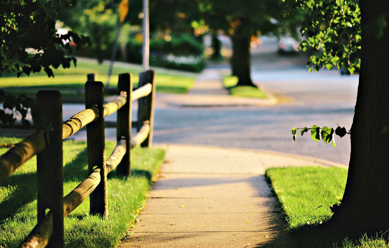 Photo wallpaper greens, grass, leaves, the sun, trees, nature, background, tree, Wallpaper, the fence, blur, the fence, …