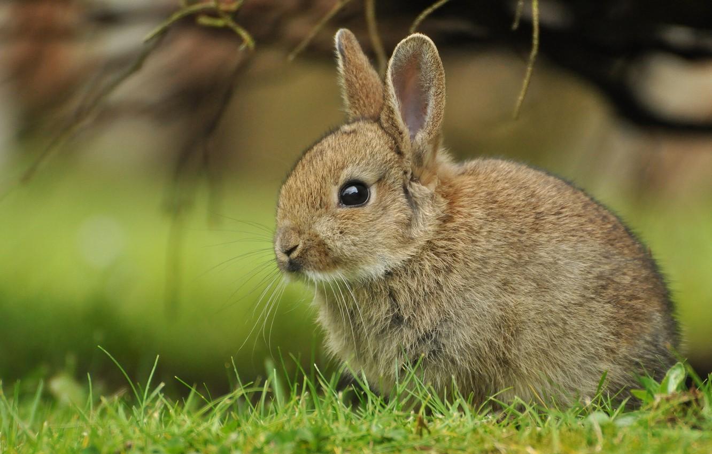 Photo wallpaper grass, rabbit, cub, rabbit