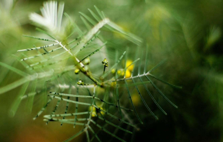 Photo wallpaper Greens, branch, blur