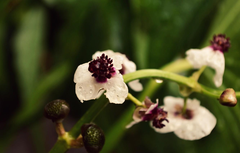 Photo wallpaper flowers, macro, Lily