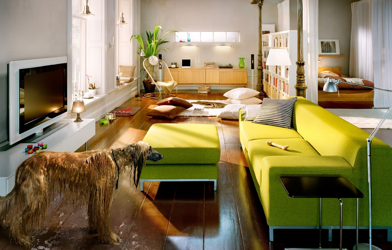 Photo wallpaper furniture, dog, puddle, Room