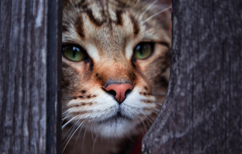 Photo wallpaper eyes, cat, look, Kote