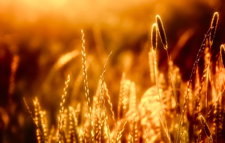 Photo wallpaper grass, light, nature, light, grass, nature, bokeh, bokeh, 2560x1600