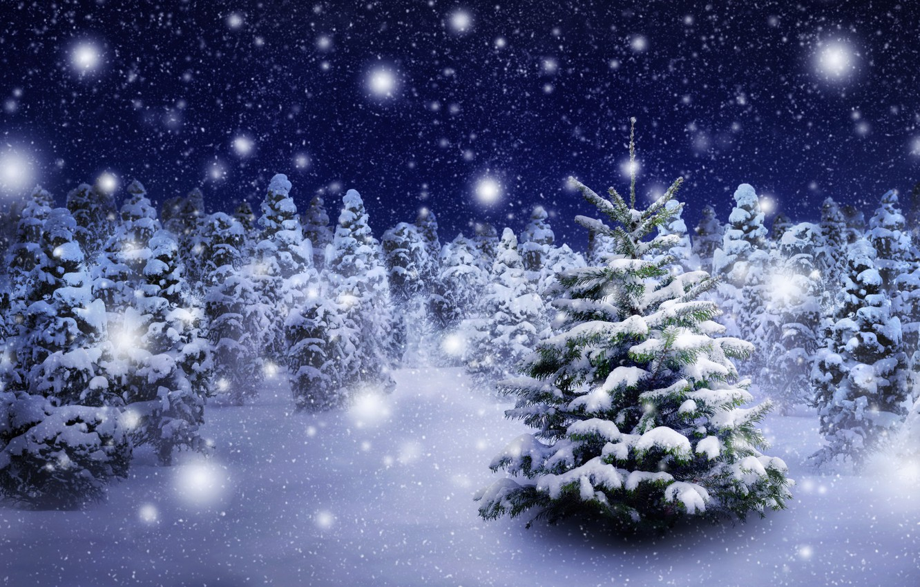 Photo wallpaper winter, forest, snow, snowflakes, tree, nature, winter, snow