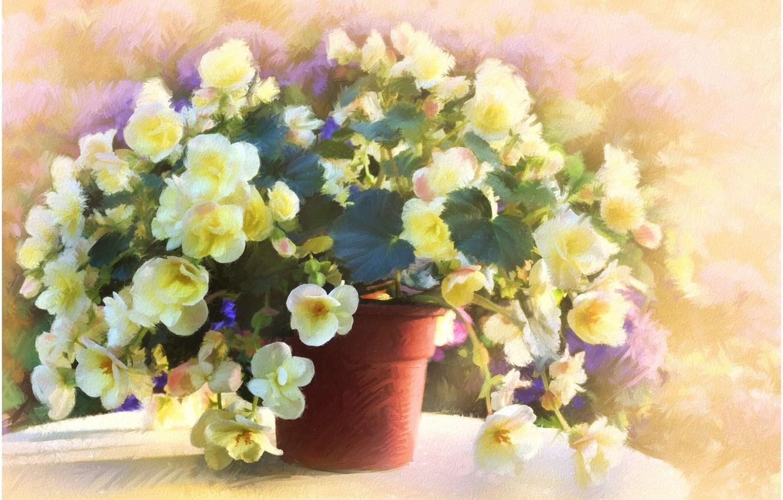 Photo wallpaper flowers, table, pot, begonias